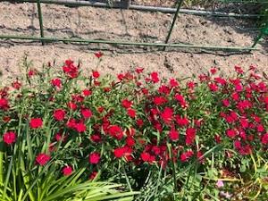 きれいな花①
