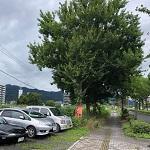 樹木アイキャッチ