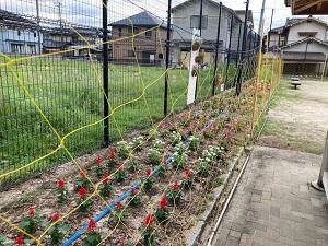 花いっぱい1